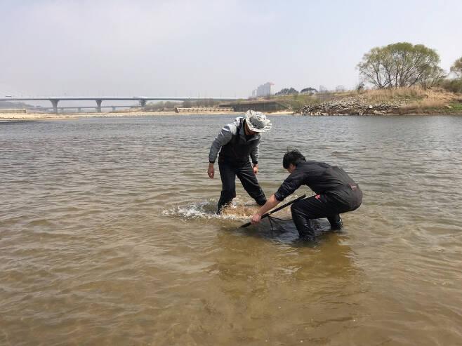 국립생태원 연구진이 지난 4일 금강 세종보 하류에서 담수 어류를 조사하고 있다.   | 환경부 제공
