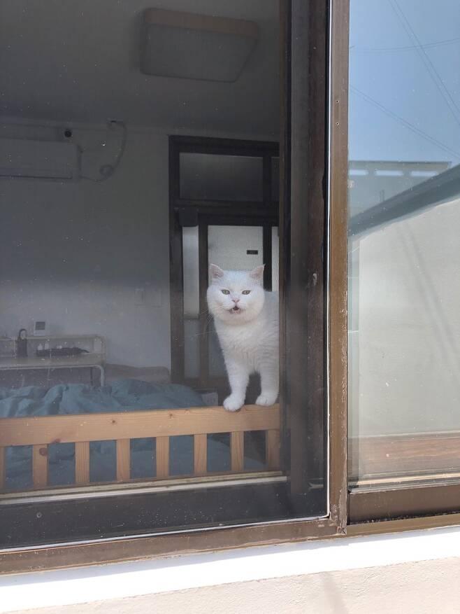 텃밭에 나가 있으면 창문으로 감시 당하는 기분이 들어서 나도 모르게 일을 열심히 하게 된다.