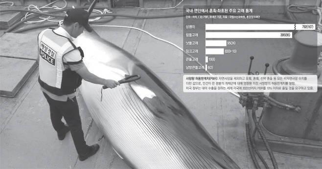 지난 12일 오전 4시10분쯤 경남 남해군 삼동면 동쪽 0.8㎞ 해상에 설치돼 있던 정치망 그물에서 죽은 채 발견된 밍크고래에 대해 해경이 불법포획 여부를 확인하고 있다. 해경은 불법포획 흔적이 없음을 확인하고 선주 측에 유통증명서를 발급했으며 이 고래는 남해군 수협 미조위판장에서 3270만원에 팔렸다.  통영해경 제공