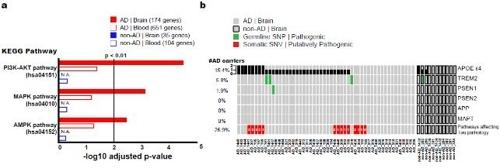 신경섬유 다발 형성에 관여하는 체성 유전변이 분석 내용 [KAIST 제공. 재판매 및 DB 금지]