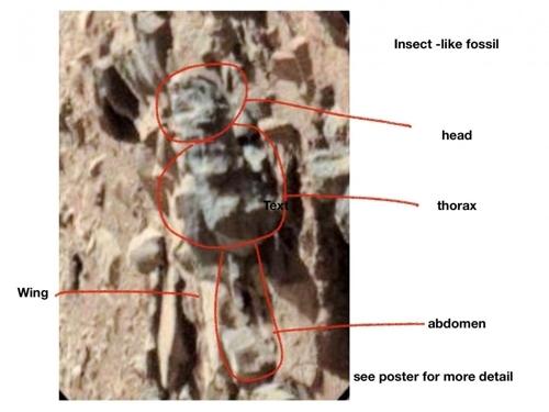 화성 곤충 화석으로 제시된 이미지 머리와 가슴, 배, 날개 등이 설명돼 있다. [윌리엄 로모저 제공]