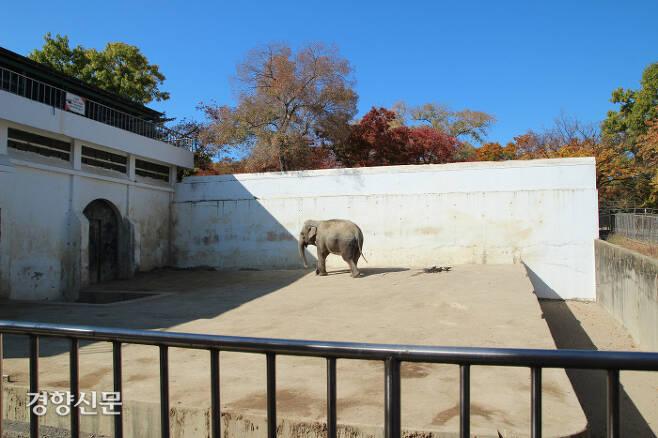 대구 달성공원 코끼리사. 국내에서 가장 좁은 시설에서 국내에서 가장 큰 수코끼리 등 두 마리를 사육 중. 한 마리에게도 부족한 면적에 콘크리트 바닥 등 열악한 환경이다.