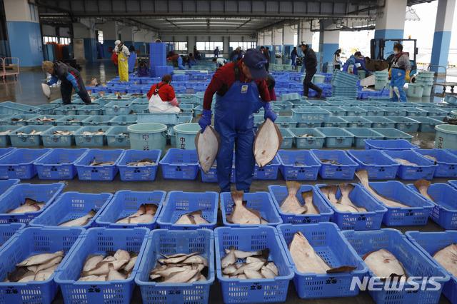 [소마=AP/뉴시스]지난달 27일 일본 후쿠시마현 소마의 생선 공판장에서 한 어민이 경매용 생선을 분류하고 있다. 2019.12.13.