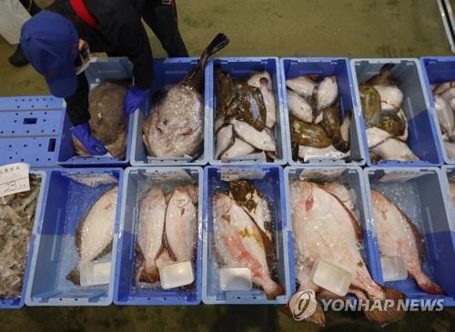 일본 어민이 후쿠시마현 앞바다에서 잡힌 어류를 정리하는 모습 [EPA=연합뉴스]