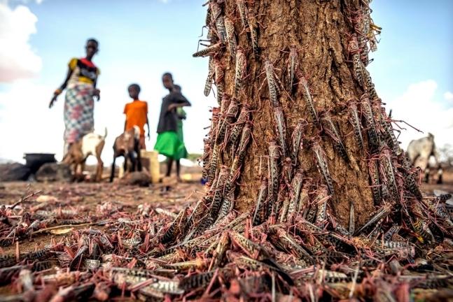 지난 4월 케냐의 한 마을에서 촬영된 메뚜기떼. 사진=AP 연합뉴스