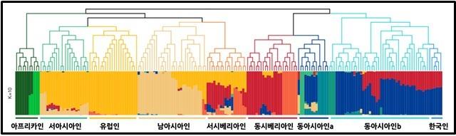 현대 한국인의 게놈 혼합(ADMIXTURE) 분석 결과. 맨 오른쪽의 한국인들은 일본과 중국인과 같은 그룹으로 묶인다. 전 인류를 총 10개의 그룹으로 나눴을 때, 한국은 짙은 푸른색으로 대표되는 남중국계와 짙은 붉은 색으로 표현되는, 북아시아계가 7:3 정도로 최근에 혼합된 것으로 나타난다 (클리노믹스 제공) 2020.06.04 / 뉴스1