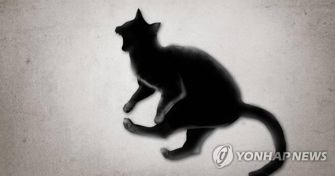 고양이 동물 학대 (PG) [제작 정연주] 일러스트