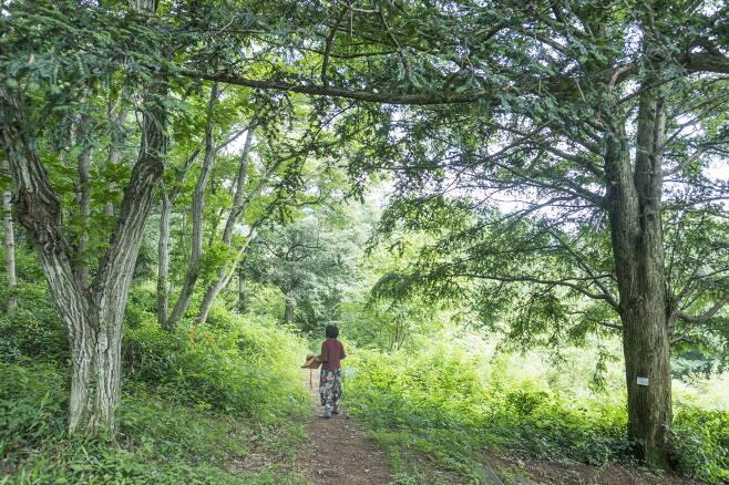 걷기좋은 비자나무숲 산책로. 이하 한국관광공사 제공