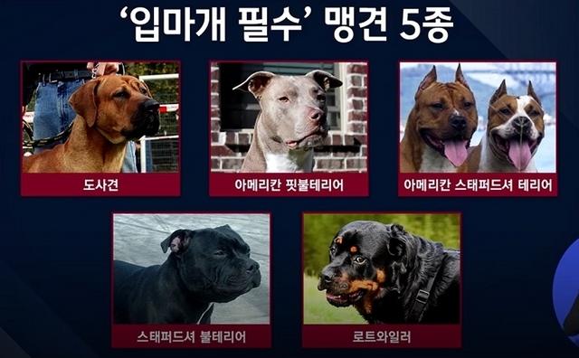 [출처-JTBC 캡쳐]