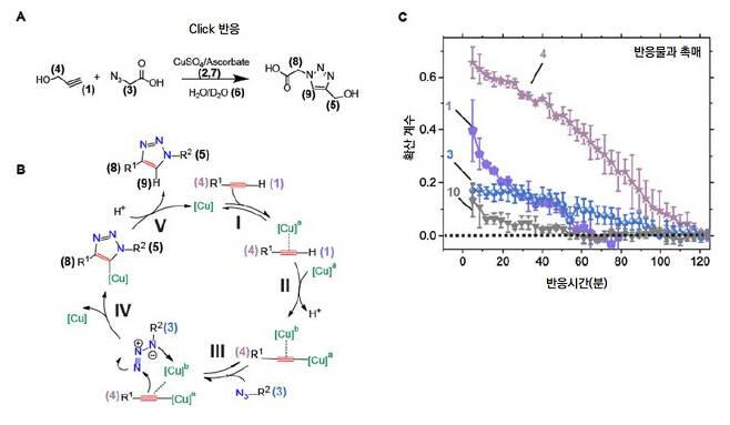 화학반응 모식도와 각 분자의 확산계수.(A) 실험에서 사용된 Click 반응의 반응식. 촉매가 관여한다. (B) 자세한 반응 과정. (C) 핵자기공명영상법으로 관찰한 각 반응물과 촉매의 확산 계수 변화. 반응 시간에 따라 확산계수 감소 양상이 뚜렷하게 구별된다.[IBS 제공]