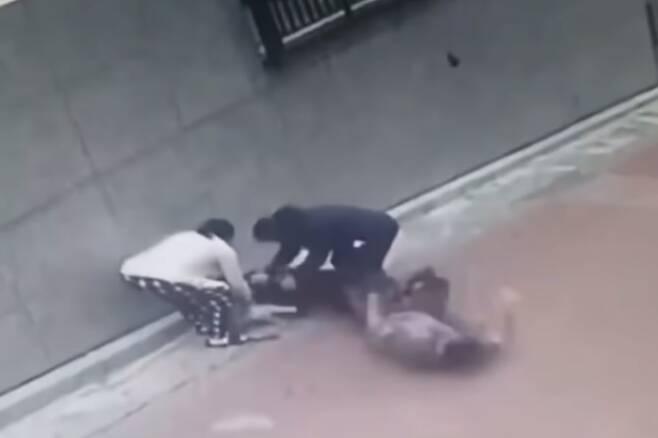 지난 25일 서울 은평구 불광동의 한 골목길에서 입마개를 하지 않은 맹견 로트와일러가 주민과 산책 중이던 소형견 스피츠를 물어 죽였다. 당시 로트와일러 견주가 개를 떼어내보려 하지만 개의 힘을 이기지 못하고 뒤로 넘어지는 순간. 2020.7.31