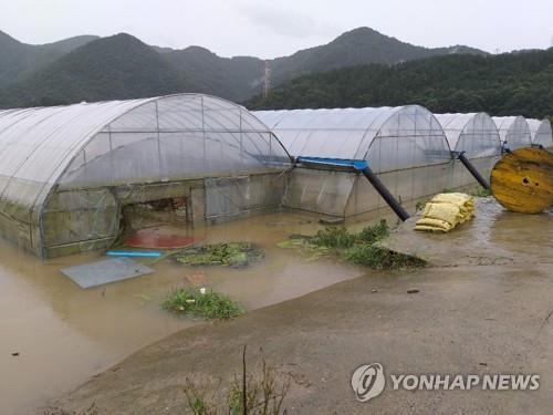 침수된 비닐하우스 [연합뉴스 자료사진]
