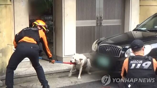 개 물림 사고 [연합뉴스TV 제공]