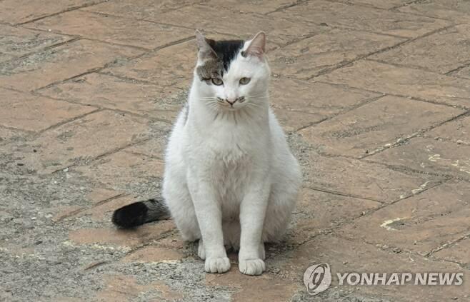 고양이 사진은 기사 내용과 직접적인 관련이 없음 [촬영 정유진]