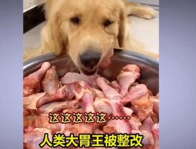 중국의 개 먹방 장면 [웨이보 캡처.재판매 및 DB 금지]