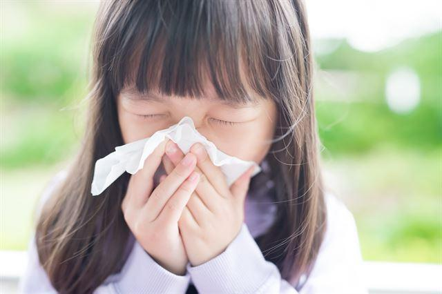 집먼지진드기, 바퀴벌레, 누룩곰팡이가 알레르기성비염을 일으키는 주원인으로 드러났다. 게티이미지뱅크