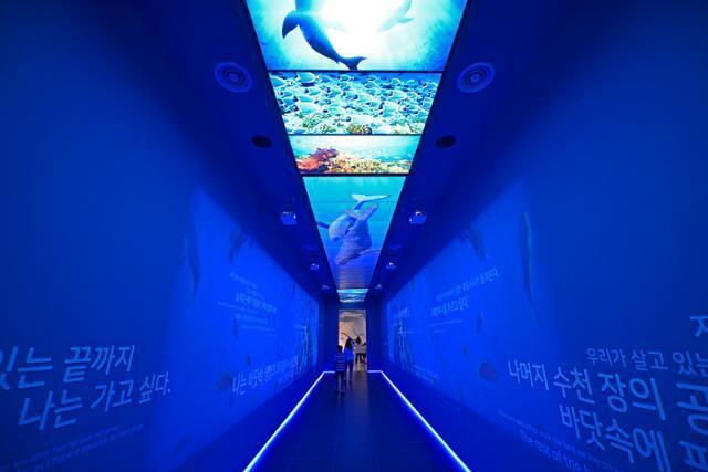 울진 국립해양과학관 오션홀 입구. 혹등고래의 안내로 바닷속으로 빠져든다.