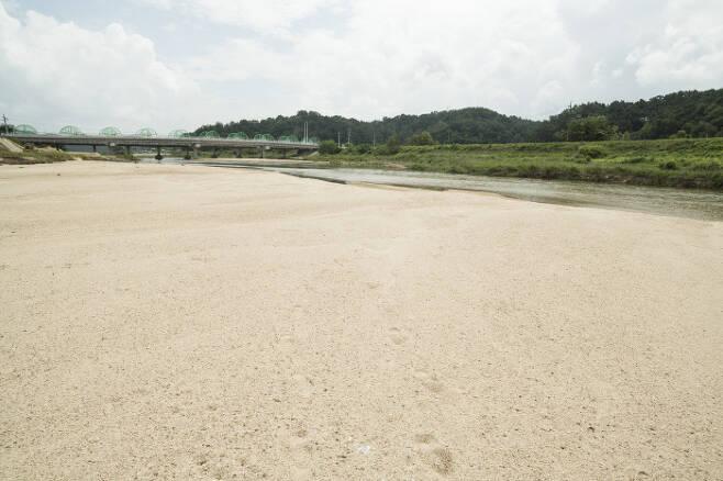 자갈밭으로 변해가고 있는 영주댐 하류와 달리 모래톱의 모습이 비교적 온전히 남아있는 영주댐 상류 20㎞ 지점의 석포교 일대 모습. 생태지평 시민생태조사단 제공.