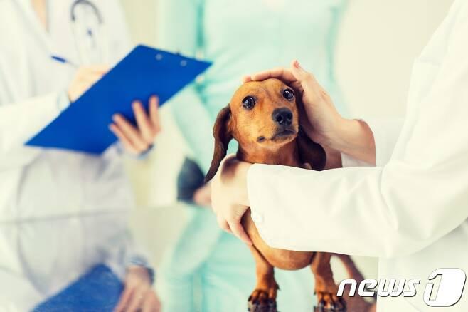 동물병원에서 진료 받는 강아지. 사진 이미지투데이 © 뉴스1