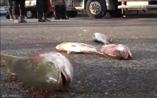 지난달 27일 서울 여의도 민주당사 앞에서 경남어류양식협회 관계자들이 일본산 활어 수입을 허용한 정부에 항의하기 위해 동원된 일본산 참돔과 방어가 길바닥에 널부러져 있다. 미래수산TV