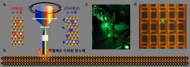카멜레온 2차원 반도체 도핑 과정.[IBS 제공]