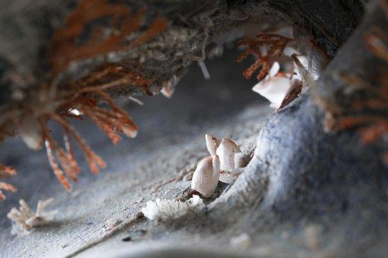 검정색 플라스틱 통 손잡이에서 발견된 생명의 흔적. 생물이 자연에 버려진 플라스틱에 적응에 생태계를 만드는 '플라스틱 스피어' 현상이다. 사진 장한나