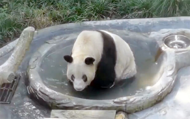 사진=충칭동물원