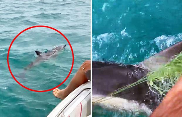 데일리메일은 4일 보도에서 낚싯줄에 걸려 꼼짝없이 바다를 맴돌던 새끼 돌고래가 인근을 지나던 주민들에게 구조됐다고 전했다./사진=필 로버트슨 인스타그램