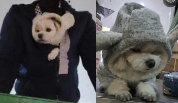 택배 기사와 함께 다니는 강아지. 사진 온라인 게시판 갈무리 © 뉴스1
