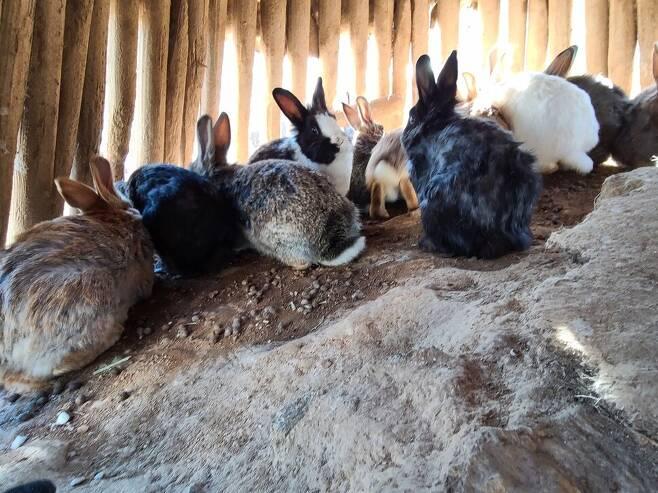 8일 토끼보호연대 현장 조사 당시 토끼들의 모습. 토끼섬 내부에는 움막 한 곳이 설치되어 있었다. 토끼보호연대 제공