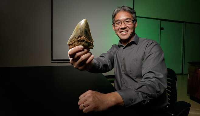 메갈로돈 전문가인 시마다 겐슈 교수가 메갈로돈의 이빨 화석을 손에 들고 있다.(사진=제프 케리온/드폴대)