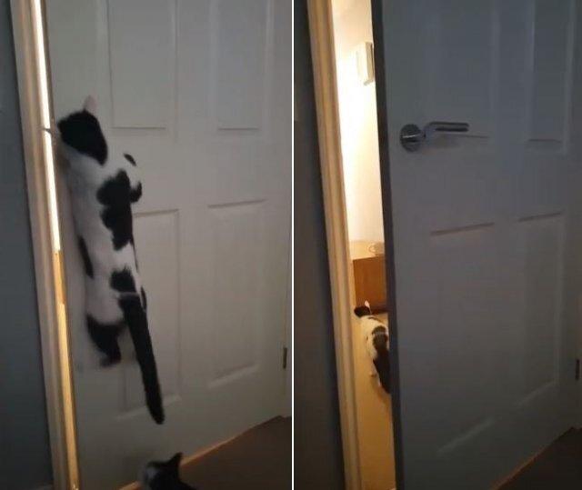 영국에 거주하는 에이미 케네디의 반려묘 '심바'는 스스로 방문을 열 수 있다. 유튜브 동영상 캡처