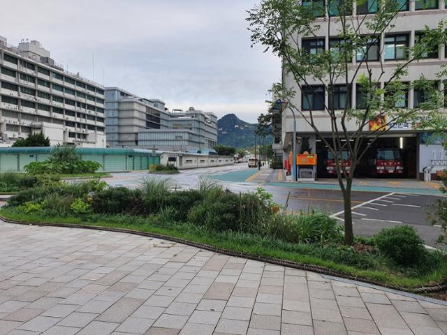 서울 종로구청 인근 자투리 공간에 식재된 나무로, 녹색 빛을 띄고 있다. 종로구청 제공
