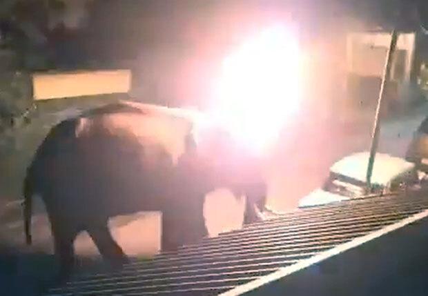 당황한 코끼리는 서둘러 숲으로 자취를 감췄지만, 코끼리가 저 멀리 달아날 때까지도 불길은 어둠 속에서 활활 타올랐다.