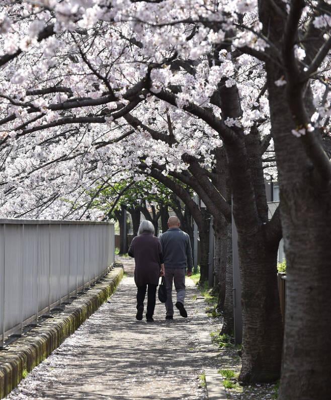 일본에서 벚꽃축제를 취소하고 있다(사진=AFP)