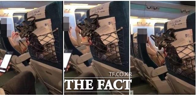 2일 <더팩트> 취재결과를 종합하면 지난달 28일 오후 6시 50분께 경북 포항에서 서울로 향하던 KTX 열차 내에서 승객간 말다툼이 일어났다. /보배드림 캡처