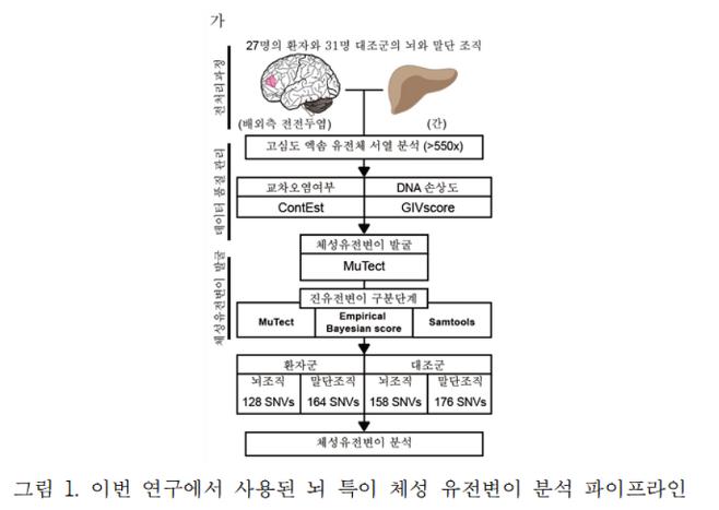 이번 연구에서 사용된 뇌 특이 체성 유전변이 분석 파이프라인. /자료=카이스트