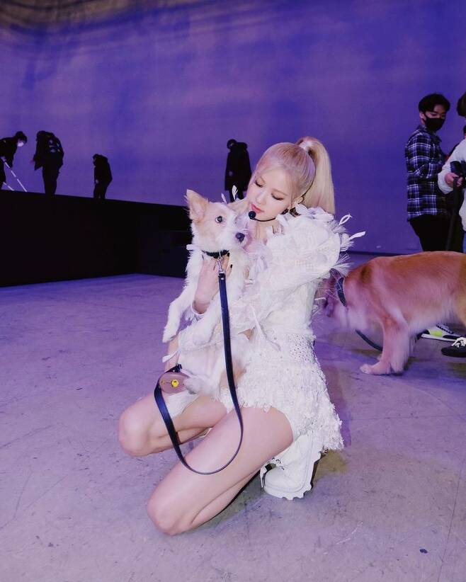 Group BLACKPINK Rosé has revealed a friendly recent situation with Pet Hank.Rosé posted several photos on his Instagram account on March 31, along with a puppy emoji.The released photo shows Rosé, who is waiting below before the stage, posing with his Pet Hank.The cute Tank and the appearance of Rosé holding him as if he were precious give him warmth.Earlier, Rosé adopted Tank, a dog that was abandoned through a shelter last December; Tank, including Rosé, is also receiving the love and attention of global fans.Meanwhile, Rosé appeared on Japanese terrestrial Nihon Terevi Similar Kiri earlier in the day, and also appeared on NBCs Kelly Clarkson Show on the 29th (local time) to decorate the talk show and stage.