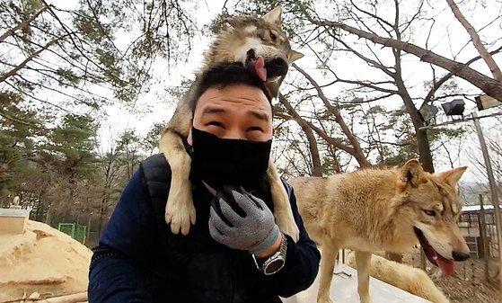 대전 오월드에서 늑대가 사육사 박중상 씨의 등에 올라타면서 친근함을 표시하고 있다. 왕준열PD