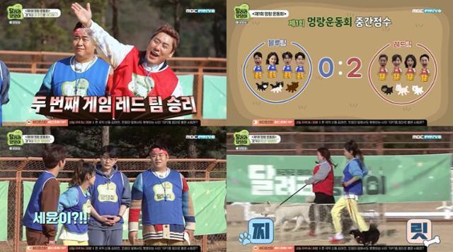 MBC에브리원 '달려라 댕댕이'의 출연진이 멍랑 운동회를 즐겼다. 방송 캡처