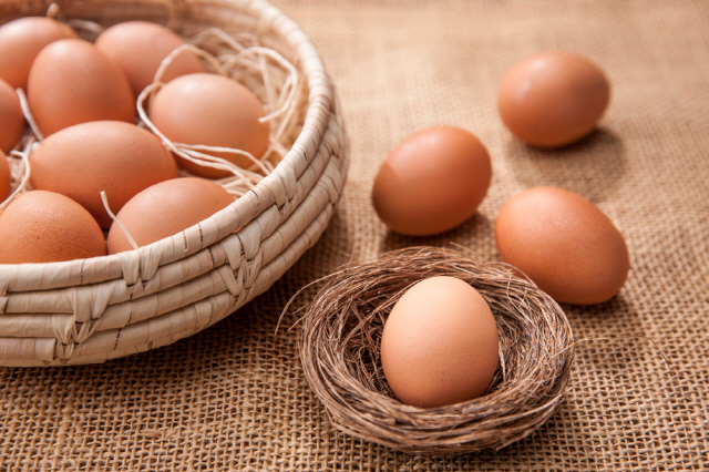 달걀 신선도를 확인하려면 그리고 신선하게 보관하려면 달걀의 '기실'을 알아야 한다./사진=클립아트코리아
