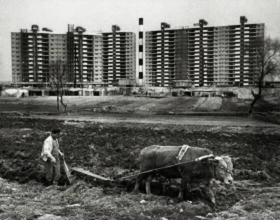 1978년 서울 강남구 압구정동에서 밭을 가는 농부. 뒤편으로 현대 아파트 공사장이 보인다. 사진 서울시