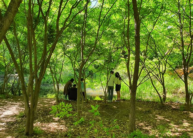 경기 오산 물향기수목원 내 습지생태원에서 방문객들이 연못 안을 들여다 보고 있다. /사진=송경은 기자