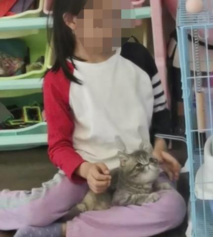 중국서 어린 소녀 1주일여만에 돌연 탈모…'고양이 때문' [봉황망 캡처.재판매 및 DB 금지]