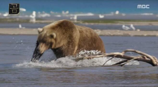 출처: MBC 다큐멘터리 '곰' 방송화면 캡처