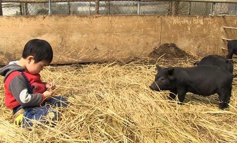 출처: 친환경 돼지농장에서 아기 돼지와 놀고 있는 황윤 감독의 아들 도영 군.