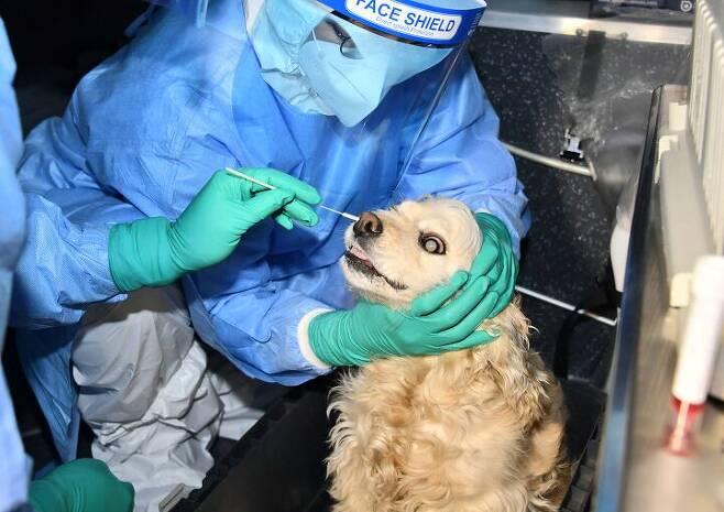 출처: 코로나19 검사받는 강아지. 사진: 서울시청 / AFP.