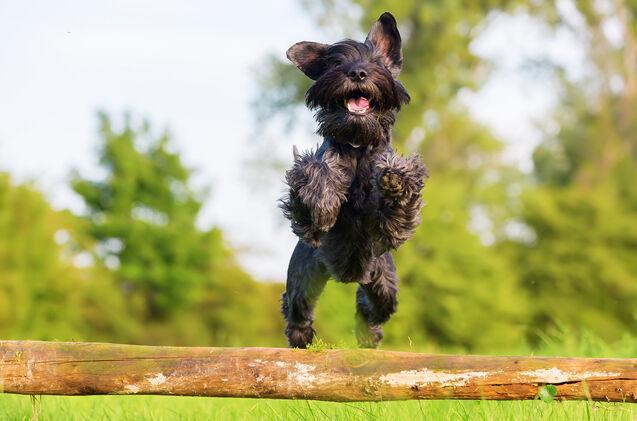 출처: https://www.petguide.com/blog/dog/top-10-medium-sized-dog-breeds/