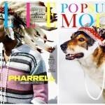출처: https://3milliondogs.com/3-million-dogs/homeless-dogs-recreate-fashion-magazine-covers-and-the-results-are-too-cute/