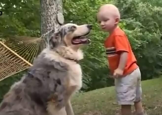 출처: https://wamiz.com/chiens/actu/regardent-chien-jouer-fils-mouvement-terrifie-video-12252.html